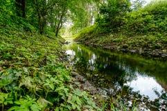 Όχθεις ποταμού στον πιό forrest Στοκ εικόνες με δικαίωμα ελεύθερης χρήσης