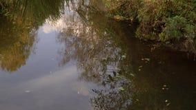 Όχθεις των μικρών δασικών ποταμών το καλοκαίρι απόθεμα βίντεο