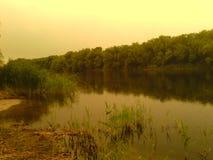Όχθη ποταμού με τους καλάμους και τα δέντρα στοκ εικόνες