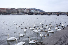 Όχθη ποταμού στην Πράγα. Στοκ Εικόνες
