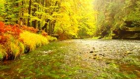 Όχθη ποταμού φθινοπώρου με τα πορτοκαλιά φύλλα οξιών Φρέσκα πράσινα φύλλα στους κλάδους ανωτέρω - το νερό κάνει την αντανάκλαση Β απόθεμα βίντεο