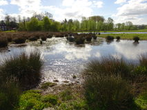 Όχθη της λίμνης άνοιξη στοκ εικόνα με δικαίωμα ελεύθερης χρήσης