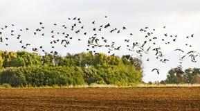 Όχλος των πουλιών. Στοκ Εικόνα