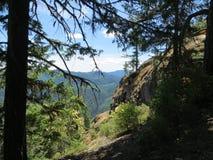 Όψη από το δάσος Στοκ Εικόνες