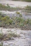 όψη ερήμων Στοκ εικόνα με δικαίωμα ελεύθερης χρήσης
