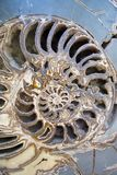 όψη κοχυλιών nautilus Στοκ εικόνες με δικαίωμα ελεύθερης χρήσης