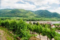 Όψη πέρα από τον αμπελώνα στον ποταμό Δούναβη Στοκ Εικόνες