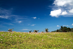 όψη παραλιών στοκ φωτογραφία με δικαίωμα ελεύθερης χρήσης