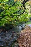 όψη ποταμών Στοκ εικόνες με δικαίωμα ελεύθερης χρήσης