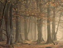 όψη της Αγγλίας Στοκ φωτογραφία με δικαίωμα ελεύθερης χρήσης