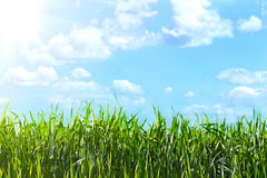 Όψη του ουρανού μέσω της πράσινης χλόης Στοκ φωτογραφία με δικαίωμα ελεύθερης χρήσης