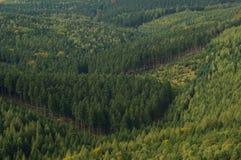 Όψη 03 Zschirnstein Στοκ εικόνες με δικαίωμα ελεύθερης χρήσης