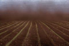 Όλα πνίγουν στο πυκνό ρεύμα της σκόνης Στοκ Φωτογραφία