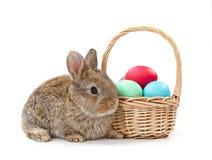 2 όλα τα αυγά Πάσχας έννοιας νεοσσών κάδων ανθίζουν τη χλόη χρωμάτισαν τις τοποθετημένες νεολαίες Κουνέλι και καλάθι με τα αυγά Π Στοκ Εικόνες
