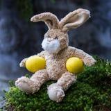 2 όλα τα αυγά Πάσχας έννοιας νεοσσών κάδων ανθίζουν τη χλόη χρωμάτισαν τις τοποθετημένες νεολαίες Χαριτωμένο κουνέλι Teddy με δύο Στοκ Εικόνες