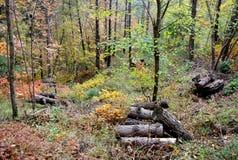 Όλα τα χρώματα του δάσους, Ιταλία Στοκ φωτογραφίες με δικαίωμα ελεύθερης χρήσης