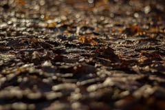 Όλα τα leafes είναι καφετιά Στοκ Εικόνες