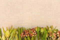 όλες οι οποιεσδήποτε σύνθεσης στοιχείων floral συστάσεις μεγέθους κλίμακας αντικειμένων απεικόνισης μεμονωμένες στο διάνυσμα Στοκ Φωτογραφία