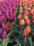 Όλοι για το λουλούδι Στοκ Εικόνα