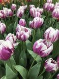 Όλοι για το λουλούδι Στοκ φωτογραφίες με δικαίωμα ελεύθερης χρήσης
