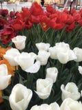 Όλοι για το λουλούδι Στοκ Εικόνες