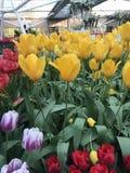 Όλοι για το λουλούδι Στοκ φωτογραφία με δικαίωμα ελεύθερης χρήσης