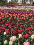 Όλοι για το λουλούδι Στοκ εικόνες με δικαίωμα ελεύθερης χρήσης
