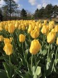 Όλοι για το λουλούδι Στοκ Φωτογραφίες