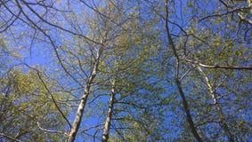 Όλος θέλω να δω είμαι πράσινος Στοκ εικόνα με δικαίωμα ελεύθερης χρήσης