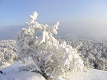 όλο το οποιοδήποτε μεμονωμένο χιόνι μεγέθους κλίμακας αντικειμένων απεικόνισης στοιχείων στο διάνυσμα δέντρων Στοκ εικόνες με δικαίωμα ελεύθερης χρήσης