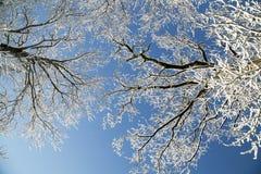 όλο το οποιοδήποτε μεμονωμένο χιόνι μεγέθους κλίμακας αντικειμένων απεικόνισης στοιχείων στο διάνυσμα δέντρων Στοκ εικόνα με δικαίωμα ελεύθερης χρήσης