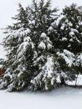 όλο το οποιοδήποτε μεμονωμένο χιόνι μεγέθους κλίμακας αντικειμένων απεικόνισης στοιχείων στο διάνυσμα δέντρων Στοκ φωτογραφίες με δικαίωμα ελεύθερης χρήσης