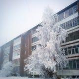 όλο το οποιοδήποτε μεμονωμένο χιόνι μεγέθους κλίμακας αντικειμένων απεικόνισης στοιχείων στο διάνυσμα δέντρων Στοκ Φωτογραφίες