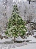 όλο το οποιοδήποτε μεμονωμένο χιόνι μεγέθους κλίμακας αντικειμένων απεικόνισης στοιχείων στο διάνυσμα δέντρων Στοκ Εικόνες