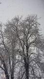 όλο το οποιοδήποτε μεμονωμένο χιόνι μεγέθους κλίμακας αντικειμένων απεικόνισης στοιχείων στο διάνυσμα δέντρων Στοκ φωτογραφία με δικαίωμα ελεύθερης χρήσης