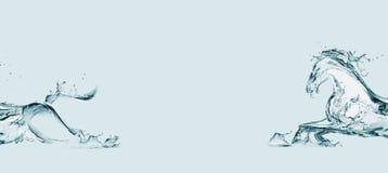 ύδωρ αλόγων Στοκ φωτογραφία με δικαίωμα ελεύθερης χρήσης