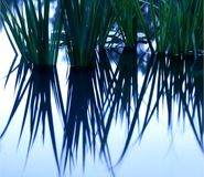 ύδωρ αντανάκλασης κρίνων στοκ φωτογραφία με δικαίωμα ελεύθερης χρήσης