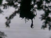 ύδωρ απελευθέρωσης Στοκ Φωτογραφία
