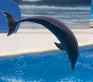 ύδωρ δελφινιών Στοκ Εικόνα
