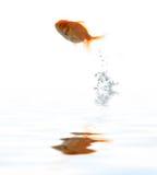ύδωρ κατοικίδιων ζώων ψαριών Στοκ φωτογραφία με δικαίωμα ελεύθερης χρήσης