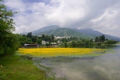 ύδωρ λουλουδιών κάστανων Στοκ Εικόνα