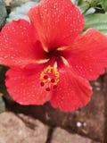 ύδωρ λουλουδιών σταγονίδιων στοκ εικόνες