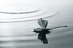 ύδωρ λουλουδιών Στοκ φωτογραφίες με δικαίωμα ελεύθερης χρήσης