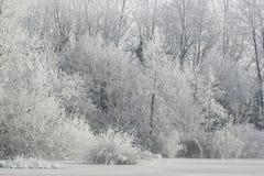 ύδωρ πάγου Στοκ Εικόνα