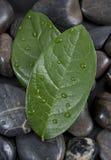 ύδωρ πετρών φύλλων zen στοκ εικόνες με δικαίωμα ελεύθερης χρήσης