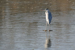 ύδωρ πουλιών Στοκ φωτογραφία με δικαίωμα ελεύθερης χρήσης