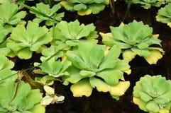 ύδωρ φυτών στοκ φωτογραφία με δικαίωμα ελεύθερης χρήσης