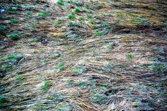 ύδωρ φυτών Στοκ εικόνες με δικαίωμα ελεύθερης χρήσης