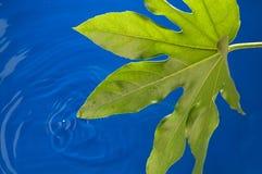 ύδωρ φύλλων στοκ φωτογραφία