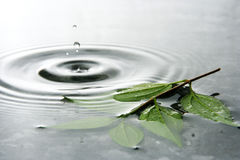 ύδωρ φύλλων Στοκ Εικόνες